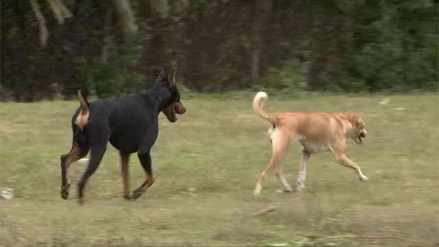 En un mes será obligatorio colocar chips de identificación a los perros