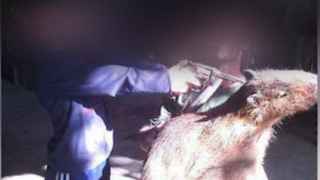 Dos detenidos por caza ilegal en Lavalleja: preparaban embutidos