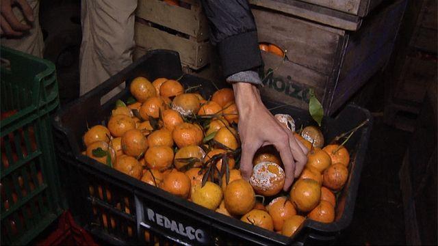 Organización recupera alimentos y los reparte entre quienes los necesitan