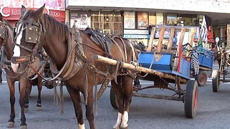 Intendencia planea cambiar caballos por motos para tirar de carritos