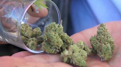 A mitad de año se estaría vendiendo marihuana en las farmacias