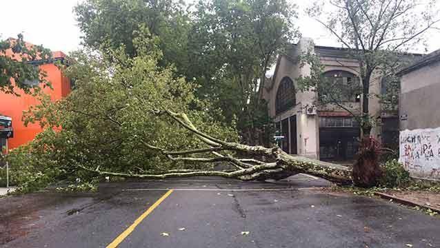 Ráfagas de viento dejan semáforos volados, árboles caídos y vidrios rotos