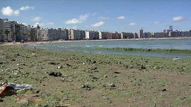 Todas las playas de Montevideo inhabilitadas por cianobacterias