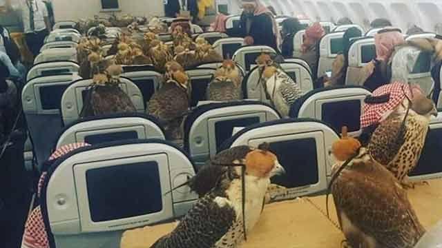 ¿Qué hacen 80 halcones y un príncipe saudí en un avión?