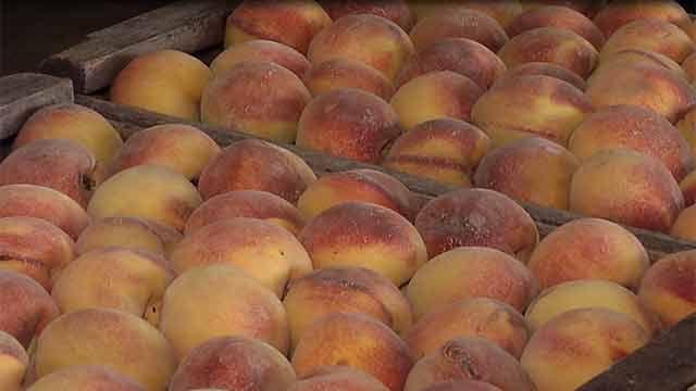 Precios de frutas y verduras registraron valor más bajo del último año