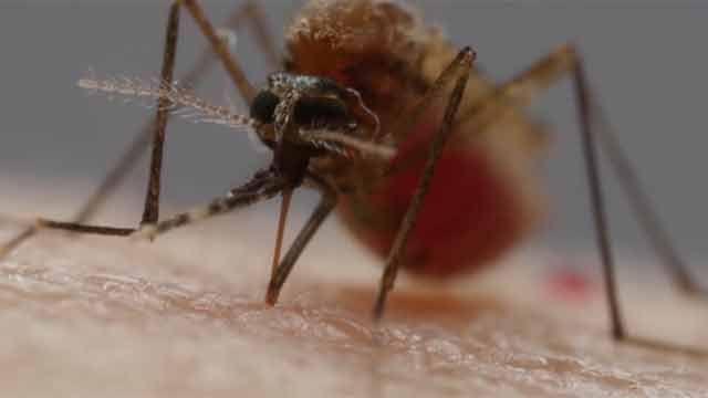 Se detectó el primer caso de fiebre chikungunya de la temporada en Uruguay