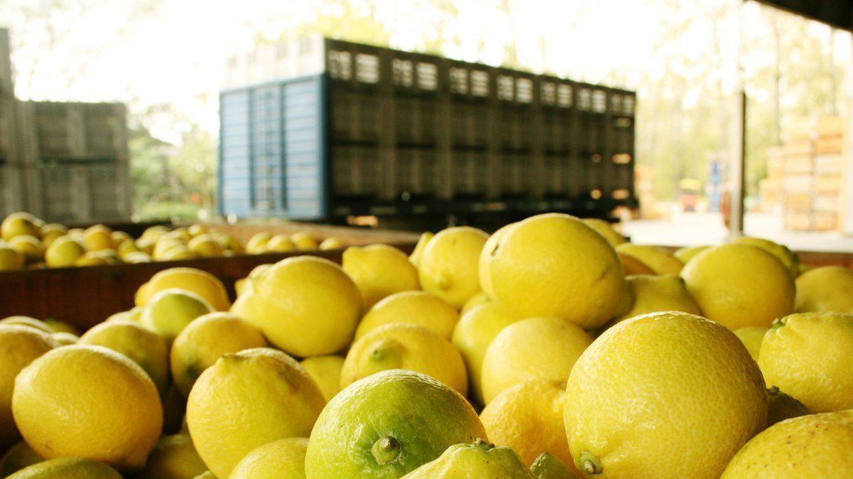 Administración Trump suspende la importación de limones argentinos