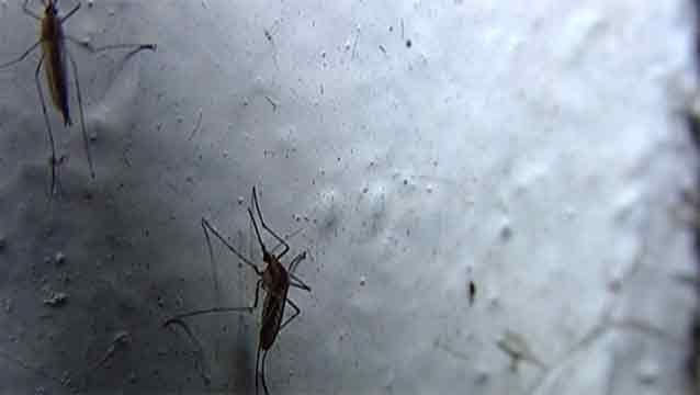 Alerta máxima por presencia del mosquito que transmite el zika