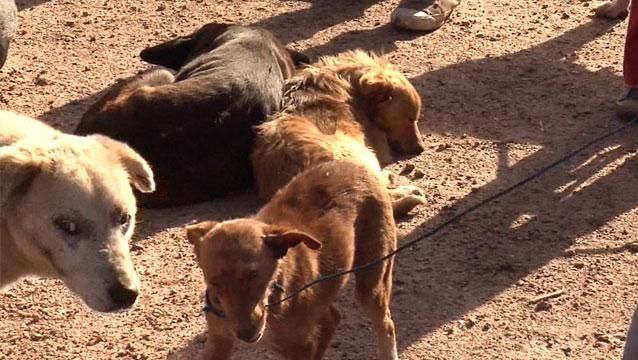 Defensora de animales condenada en España por matar miles de perros y gatos