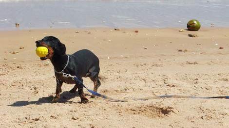 Comienza la fiscalización de presencia de perros en las playas