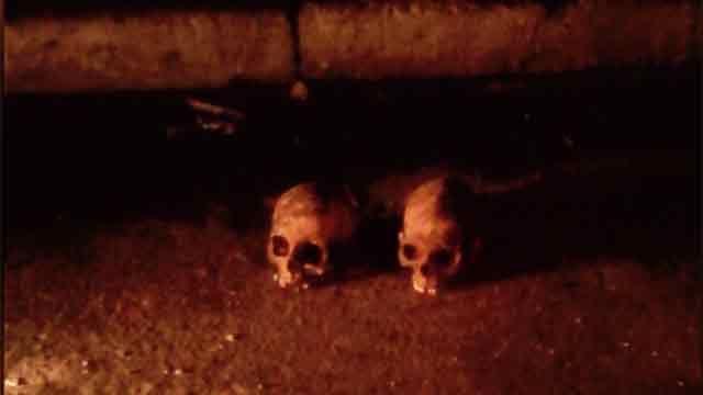 Investigan caja con 2 cráneos y huesos hallada al costado de un contenedor