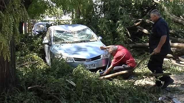 Vecinos reclaman que la Intendencia levante árboles caídos por temporal