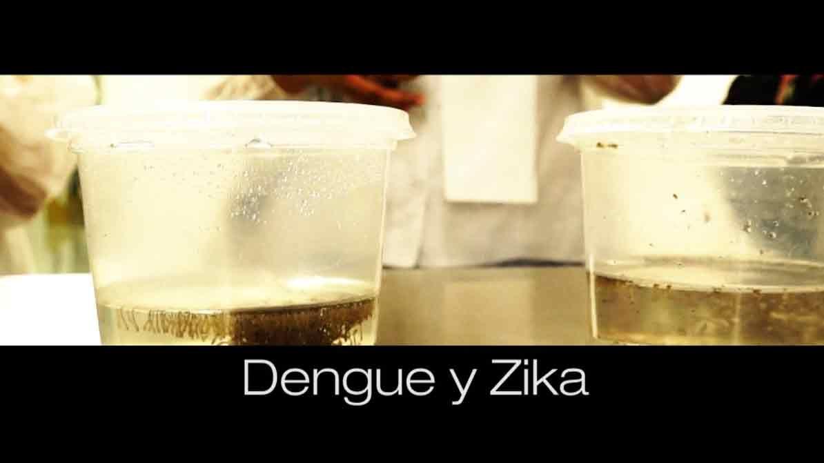 Subrayado Investiga: dengue, zika y chikungunya