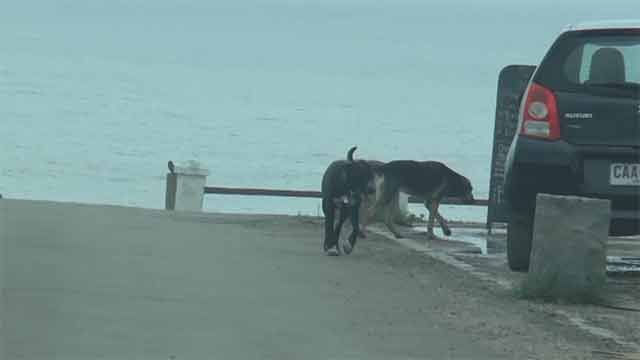 Preocupación en Rocha por perros callejeros sueltos en balnearios