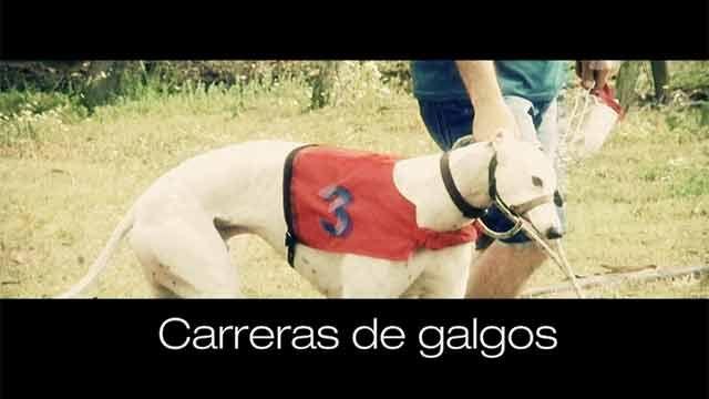 Subrayado Investiga: carreras de galgos en Uruguay