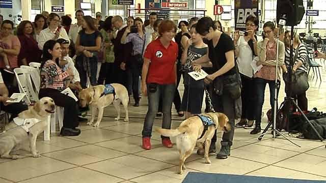 Entregaron los primeros seis perros guía entrenados en Uruguay