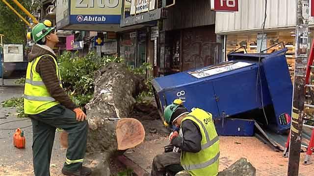 Un kiosko aplastado y un centenar de árboles caídos producto del viento