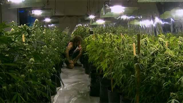 Conflicto en el Correo impide registro de consumidores de marihuana