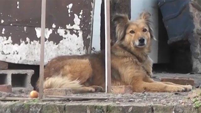 Dos dueños de perros con leishmaniasis ante la justicia penal