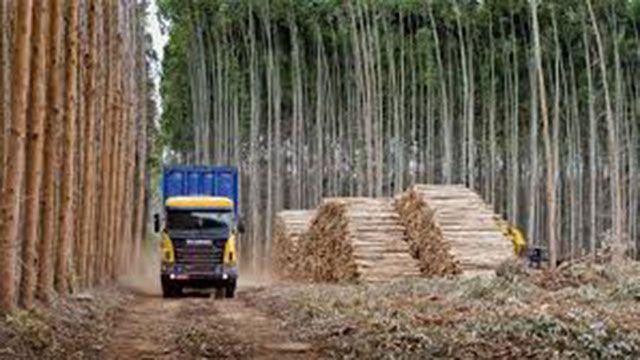 Efecto UPM: ahora Entre Ríos le quiere vender madera a Uruguay