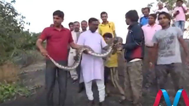 Querían sacarse una selfie con la serpiente, y no terminó bien