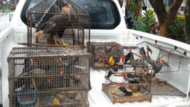 Rescatan casi 50 animales autóctonos cautivos en Durazno