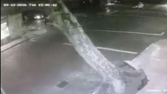 Ciclón extratropical: caída de árbol estuvo a punto de aplastar varios autos