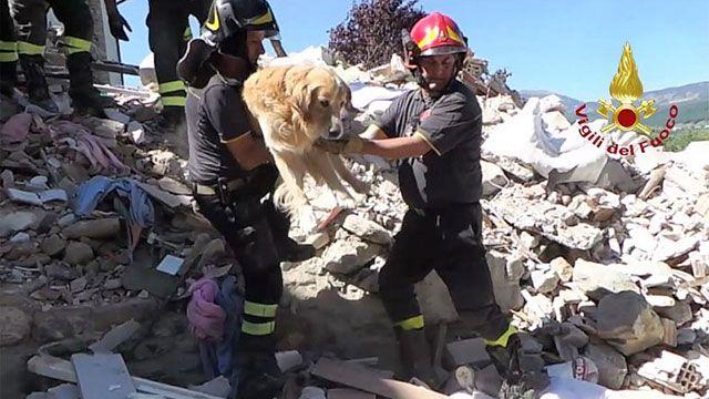 Romeo, el perro que sobrevivió tras nueve días bajo los escombros en Italia
