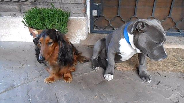 Imperdible video de los perros que sienten culpa