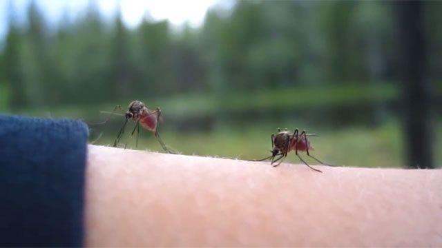 Se esperan brotes de dengue y preocupa llegada de zika al país