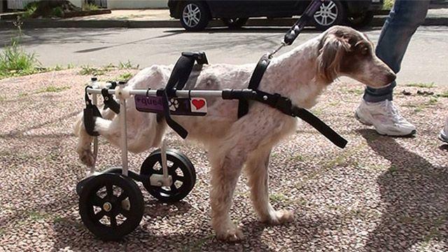 Conocé el proyecto Masque4patas: carritos para animales discapacitados