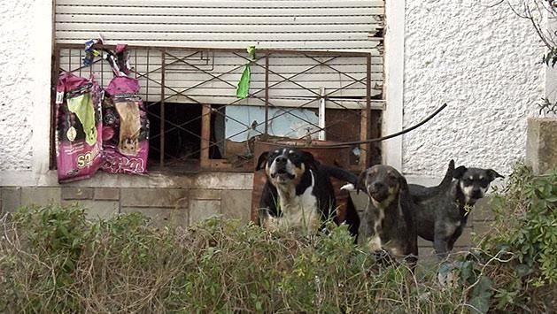 Vecina desbordada de animales en Migues dice que no los puede alimentar