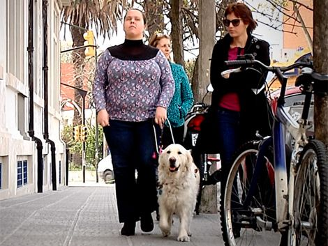Nuevas normas habilitan a perros guías a entrar a cualquier lugar
