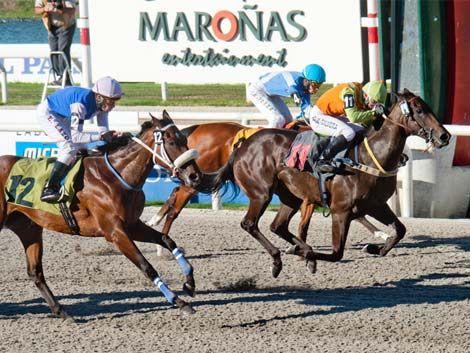 Fin de semana hípico con 4 clásicos el domingo en Maroñas