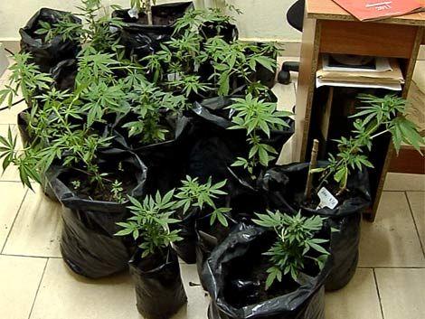 Mujica enviará al Parlamento proyecto para legalizar marihuana
