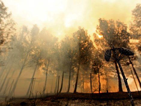 Casi 2000 personas luchan para sofocar incendios en Valencia