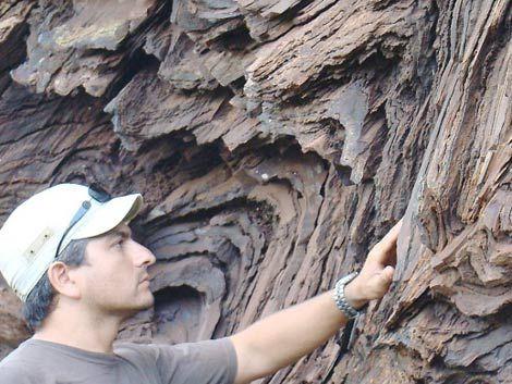 Geólogos uruguayos descubren vida animal con 585 millones de años
