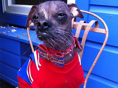 En Estados Unidos eligieron al perro más feo del mundo