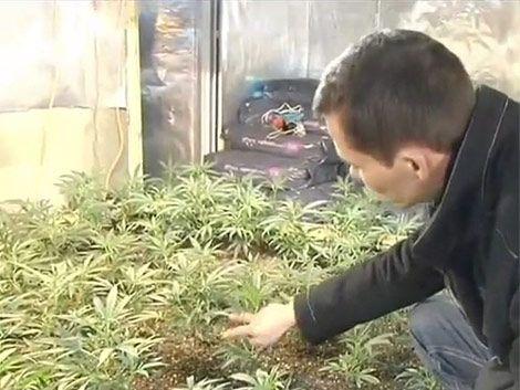 Mujica negó que el gobierno piense en empezar a plantar marihuana