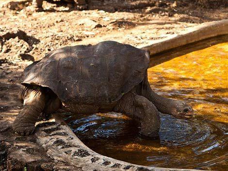 Luto en el mundo animal: murió solitario Jorge