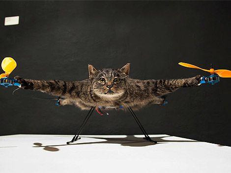Un artista holandés convirtió a su gato muerto en un helicóptero