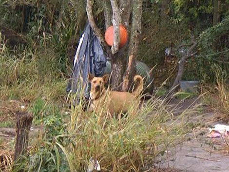 En una casa de Migues viven 100 perros y 40 gatos abandonados