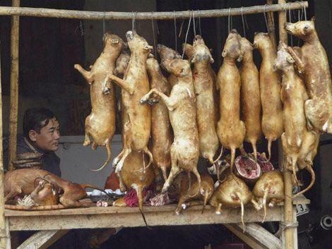 Violencia por robo de perros para consumo en Vietnam