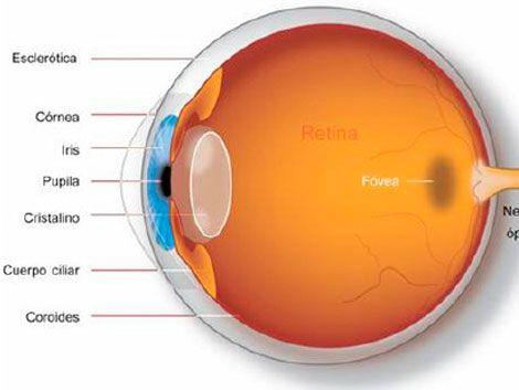 Retina electrónica devuelve parte de visión a pacientes ciegos