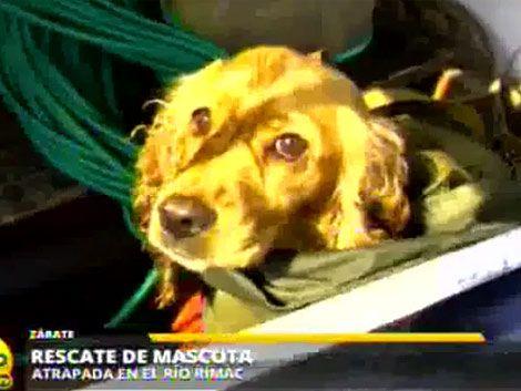 Policías rescataron a un perro atrapado en islote de un río