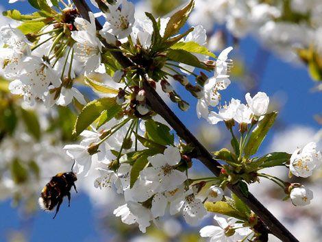 Comienzo de primavera con récord de temperaturas altas en EE.UU.