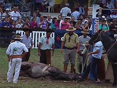 Abucheo en el Prado por maltrato a un caballo antes de jineteada