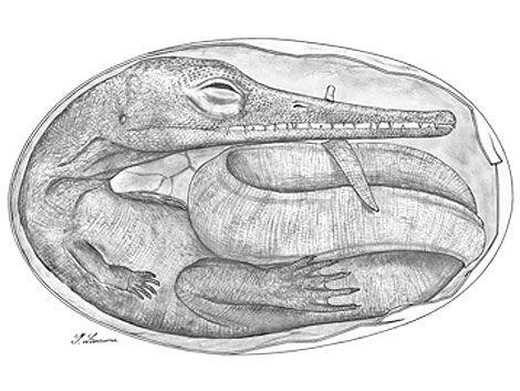 Hallan en Uruguay los embriones de reptiles fósiles más antiguos