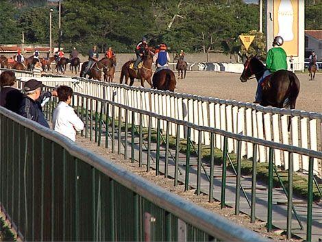 Autorizan las carreras con caballos radicados en cada hipódromo