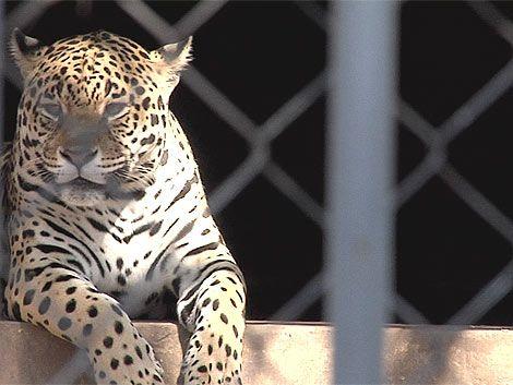 El zoológico espera recibir unas 20.000 personas esta semana
